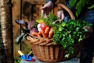 Conheça os melhores alimentos para limpar o corpo e manter o bem-estar!
